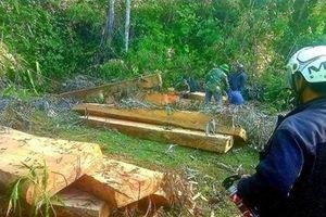 Phá rừng nghiêm trọng, lâm tặc vận chuyển gỗ nối đuôi nhau như 'cả đoàn tàu'