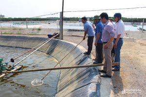 Gần 8 ha diện tích tôm vụ 1 ở Quỳnh Lưu bị bệnh đốm trắng