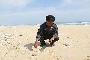 Công bố kết quả xét nghiệm mẫu cá chết ở biển Quảng Trị