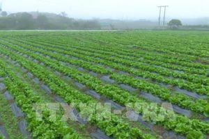 Cà Mau vận động người dân sản xuất hàng hóa nông sản ''sạch''