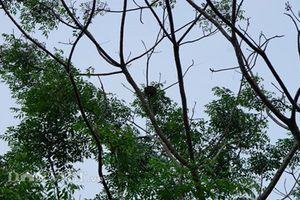 Xem người dân săn lộc rừng kiếm tiền triệu