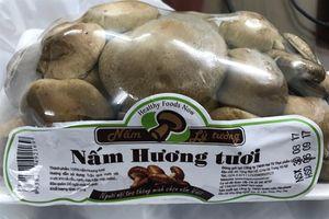 Nấm lý tưởng Việt Nam lại bị nghi ngờ 'có vấn đề'