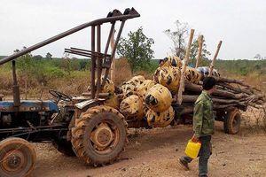 Phát hiện đường dây buôn lậu cây Giáng Hương cực lớn tại Tây Nguyên