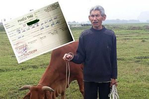 Trâu bò ra đồng ăn cỏ, chủ phải đóng phí!