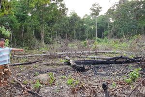 Kiên Giang vào cuộc xử lý nạn phá rừng ở Phú Quốc