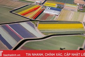 Cánh đồng hoa tulip ở Hà Lan đẹp như tranh vẽ khi nhìn từ trên cao