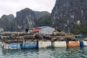 Hải Phòng: Sẽ cắt giảm lồng bè nuôi thủy sản ở vịnh Cát Bà