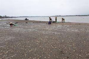 Đổ nợ vì ngao đang xảy ra tại các huyện ven biển tỉnh Thanh Hóa
