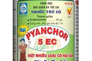 Pyanchor 5EC trừ cỏ cho ruộng lúa