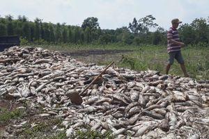Hàng chục tấn cá chết chưa rõ nguyên nhân