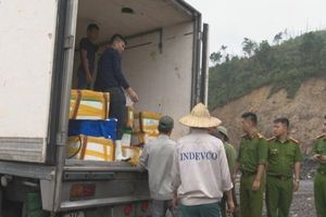 Quảng Ninh: Hơn 3,5 tấn cá không có hóa đơn chứng từ bị tiêu hủy
