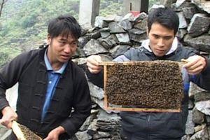 Gỡ 'nút thắt' phát triển thương hiệu mật ong bạc hà