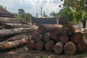 Trùm buôn gỗ Phượng râu: Hành xử tốt, nhà cửa khang trang