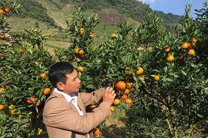 Phù Yên – Sơn La: Xây dựng kế hoạch sử dụng đất 2018 bền vững, hiệu quả