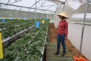 Ngỡ ngàng với trang trại cây trái châu Âu giữa thành phố sương mù