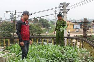 Hưng Yên: Phát hiện hơn 100 cây thuốc phiện được trồng trong nghĩa trang