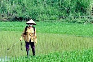Khuyến khích người dân trồng lúa hữu cơ