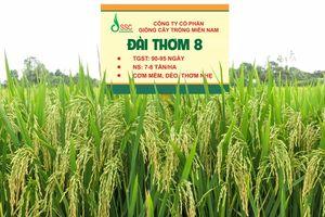 Ngăn chặn sản xuất lúa giống giả