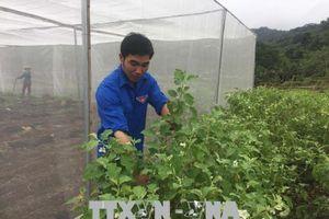 Thanh niên xã biên giới với mô hình vườn rau nhà lưới