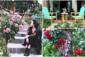 Ngẩn ngơ những ngôi nhà hoa hồng đẹp như cổ tích ở Việt Nam