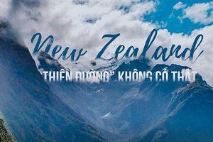 New Zealand - Thiên đường không có thật