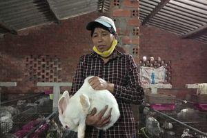 Người phụ nữ ở Đắk Lắk thu cả trăm triệu đồng mỗi năm nhờ thỏ