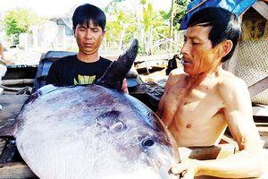 Ngư dân bắt được cá khủng