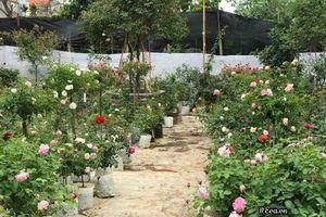 Vườn hoa hồng ngoại tiền tỷ của nữ kiến trúc sư 8X