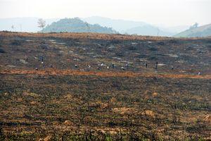 Hàng chục héc-ta rừng phòng hộ hồ Vực Mấu bị 'xẻ thịt' để trồng keo