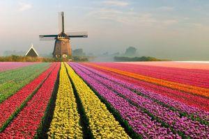 Những sắc màu đặc trưng của các nước trên thế giới