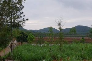 Người mua 8.000m2 đất trùng khớp với tên một Thứ trưởng