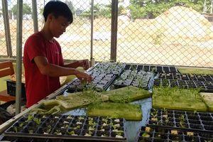 Độc đáo mô hình trồng rau thủy canh kết hơp 'cà phê quán' ở Quảng Nam