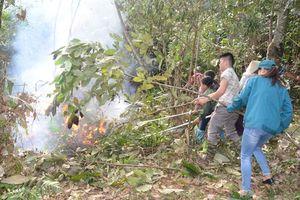 Tuyên Quang trong top 3 địa phương dẫn đầu độ che phủ rừng