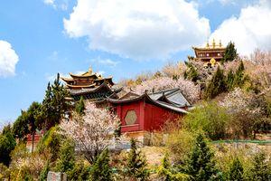 Khám phá những điểm đến hấp dẫn khi tới Lệ Giang - Shangri-La