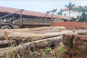 9 cán bộ kiểm lâm bị kỷ luật vì liên quan đến trùm gỗ lậu Phượng 'râu'