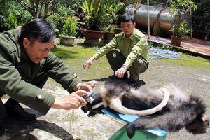 Phạt hơn 350 triệu đồng vì cất giữ trái phép 16 cá thể động vật quý hiếm