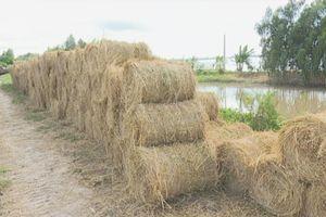 Nông dân có thêm thu nhập từ bán rơm cuộn