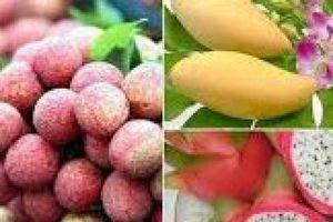 Cần tiêu chuẩn hóa chất lượng nông sản Việt để tăng cơ hội xuất khẩu