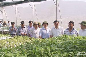 Chủ tịch Liên minh HTX Việt Nam khảo sát một số mô hình sản xuất ở Nam Đàn