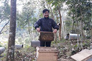Mùa ong đi lấy mật