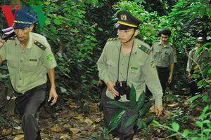 Vì sao nhiều cán bộ kiểm lâm Quảng Nam xin nghỉ việc?