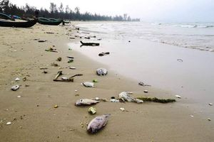 Hà Tĩnh: Khởi tố 2 cán bộ thôn nhận tiền làm hồ sơ hưởng đền bù sự cố môi trường biển