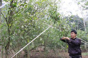 Phát triển rừng gắn với bảo vệ môi trường