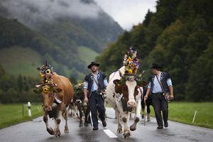 Thụy Sĩ có thể sẽ đoạn tuyệt thuốc trừ sâu