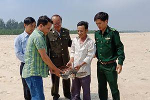 Cứu thành công cá thể rùa biển quý hiếm vướng lưới ngư dân