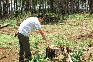 Công ty vợ nguyên phó giám đốc công an tỉnh bán đất rừng