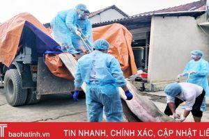 Hương Khê: Tiêu hủy 13 con lợn bị lở mồm long móng