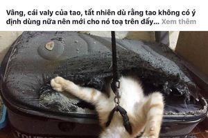 Dân mạng thích thú với chú mèo 'siêu quậy' khiến chủ nhân 'dở khóc, dở cười'