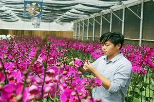 Đẹp ngất ngây vườn lan thu 10 tỷ/năm ở Đà Lạt