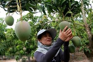 Đẩy mạnh quảng bá nông sản Việt Nam tại Nhật Bản